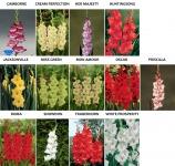 bulbi flori